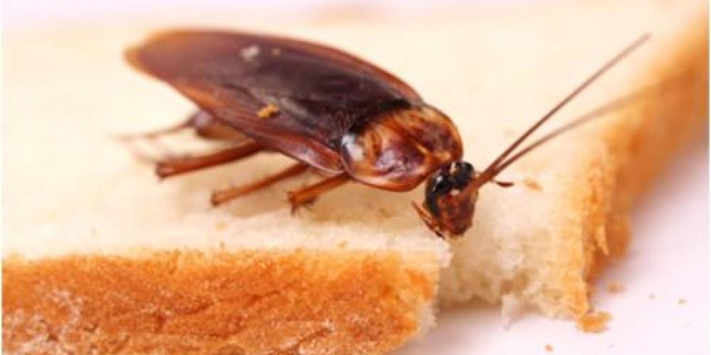 La (desafortunada) aparición de una cucaracha en nuestro negocio