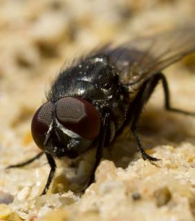 La (desafortunada) aparición de moscas en nuestro negocio