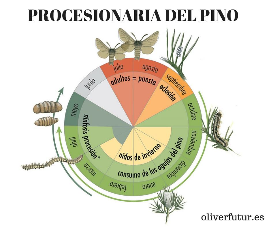 oliverfutur.es (13)
