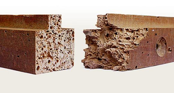 carcoma vs. termita