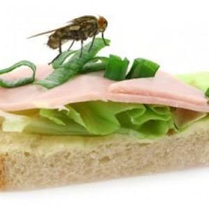 mosca-comida